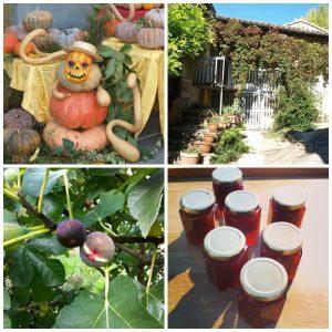 autumn collage