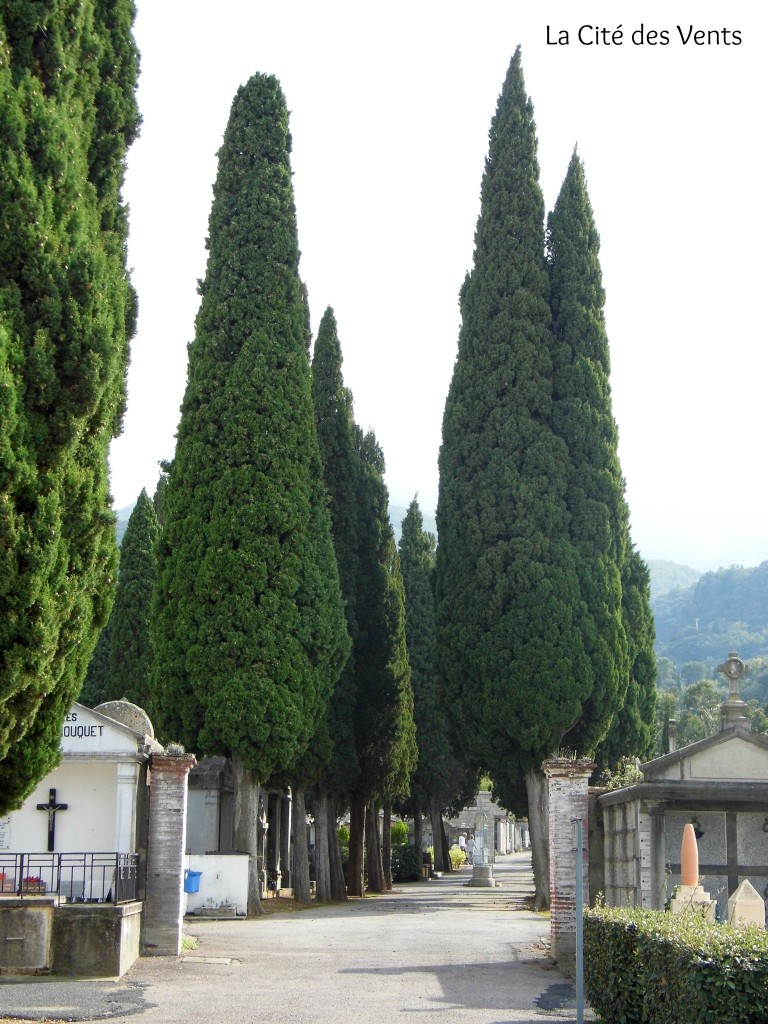 The tall cypress bring calm and grandeur to the place. Cypress are the traditional tree of the Mediterranean cemeteries. It comes from a greek mythological legend.