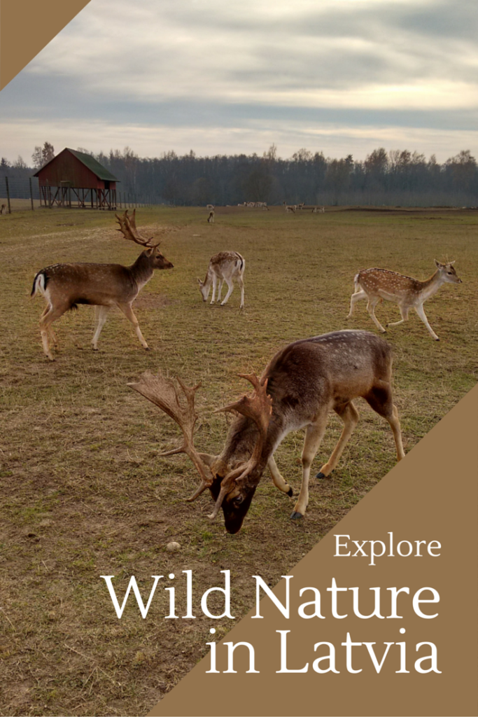 Explore Wild Nature in Latvia