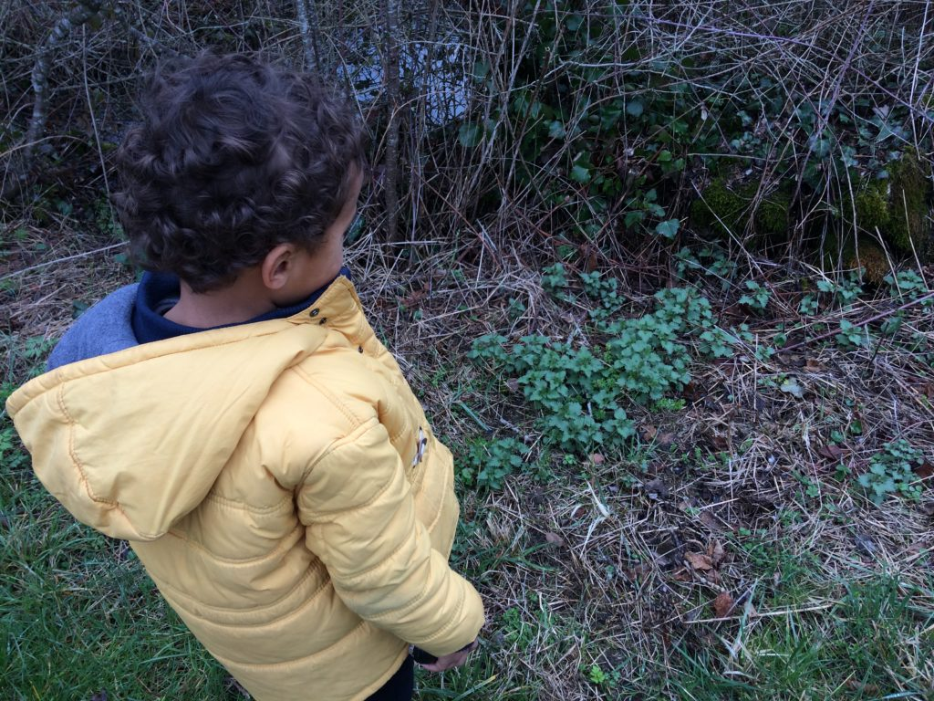Spring foraging is the perfect seasonal activity for kids - Multicultural Kid Blogs