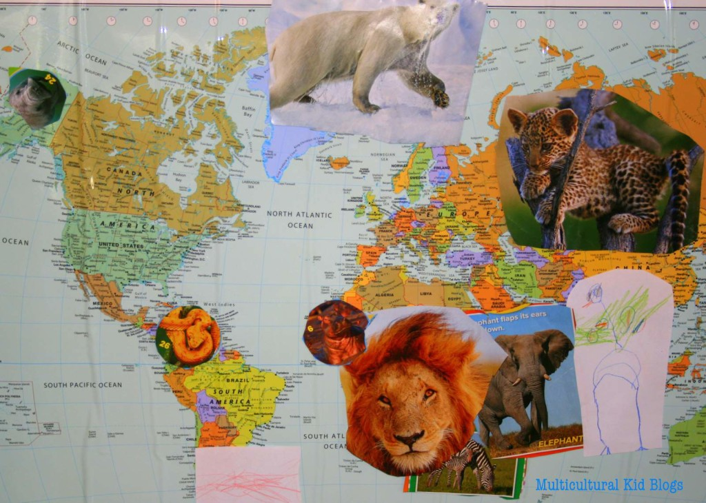 MappingPolarBearBook