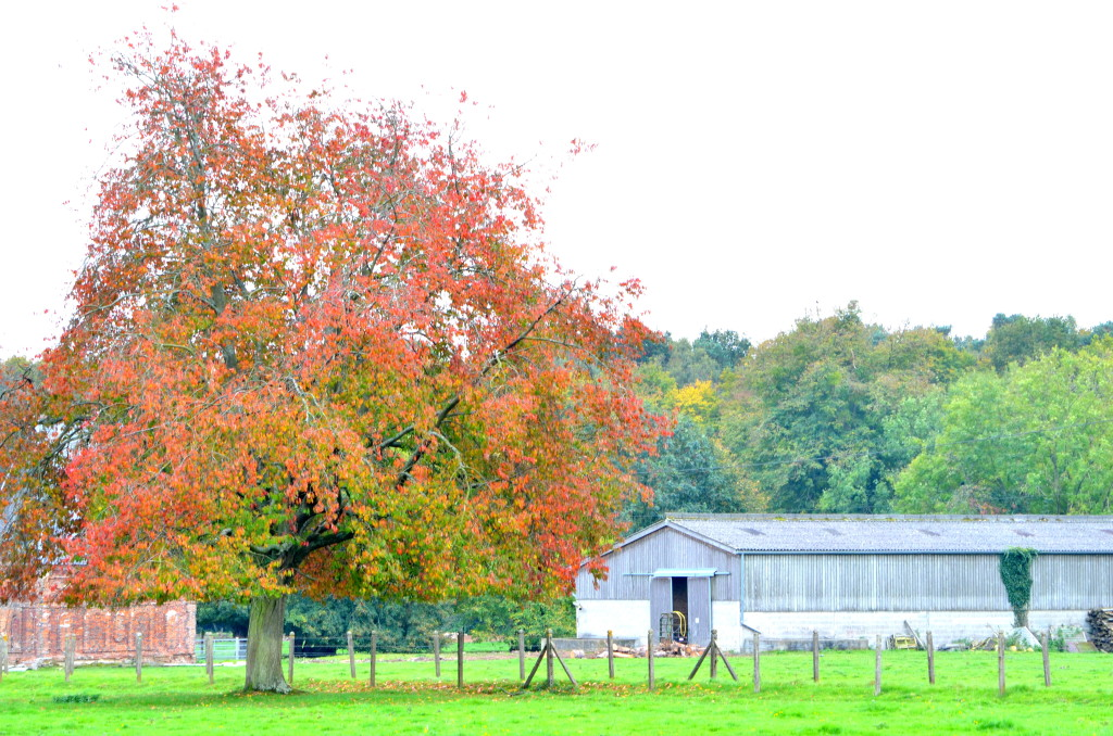Autumn in Normandy, France | Multicultural Kid Blogs