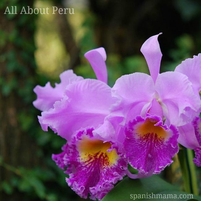 all about peru 3