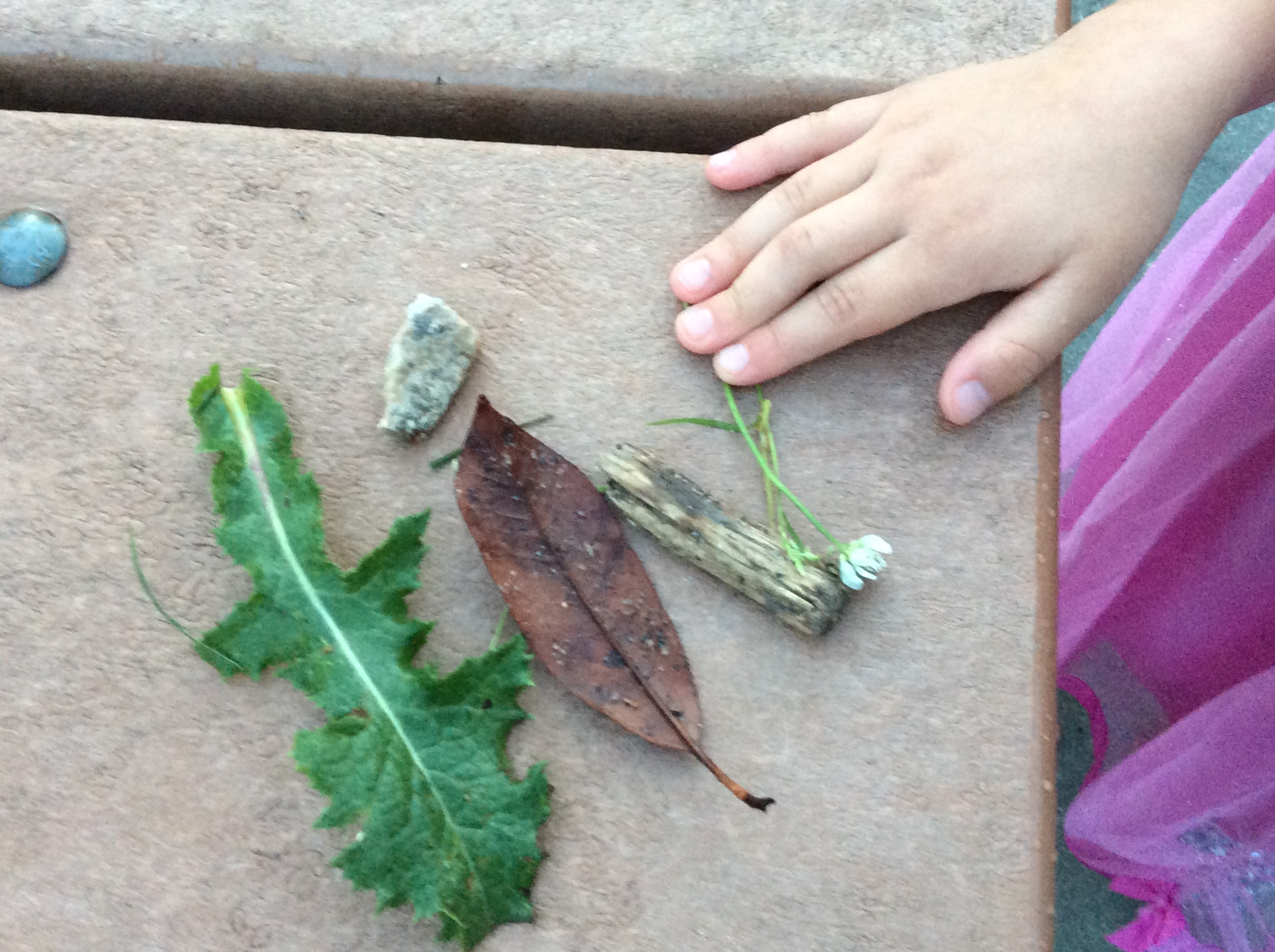 Language learning outdoor activities connect kids to the natural world.
