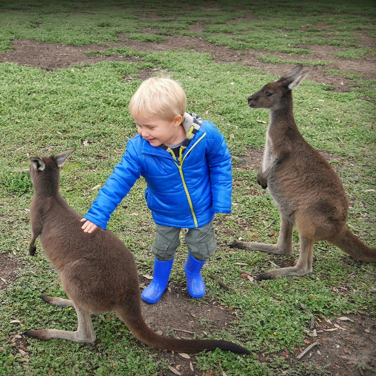 Australia Travel With Kids - Uralla Wildlife Sanctuary Western Australia
