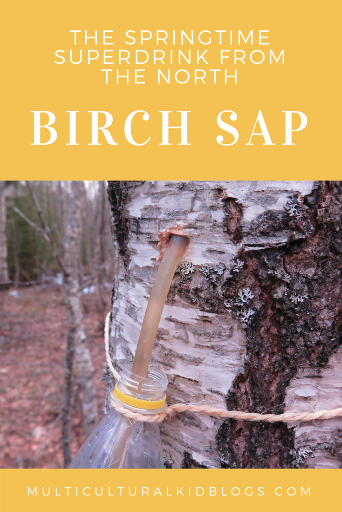 Birch Sap: the Springtime Superdrink