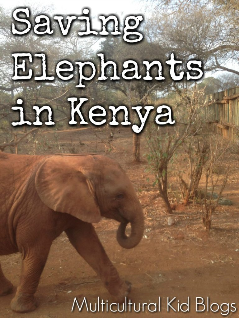 Saving Elephants in Kenya