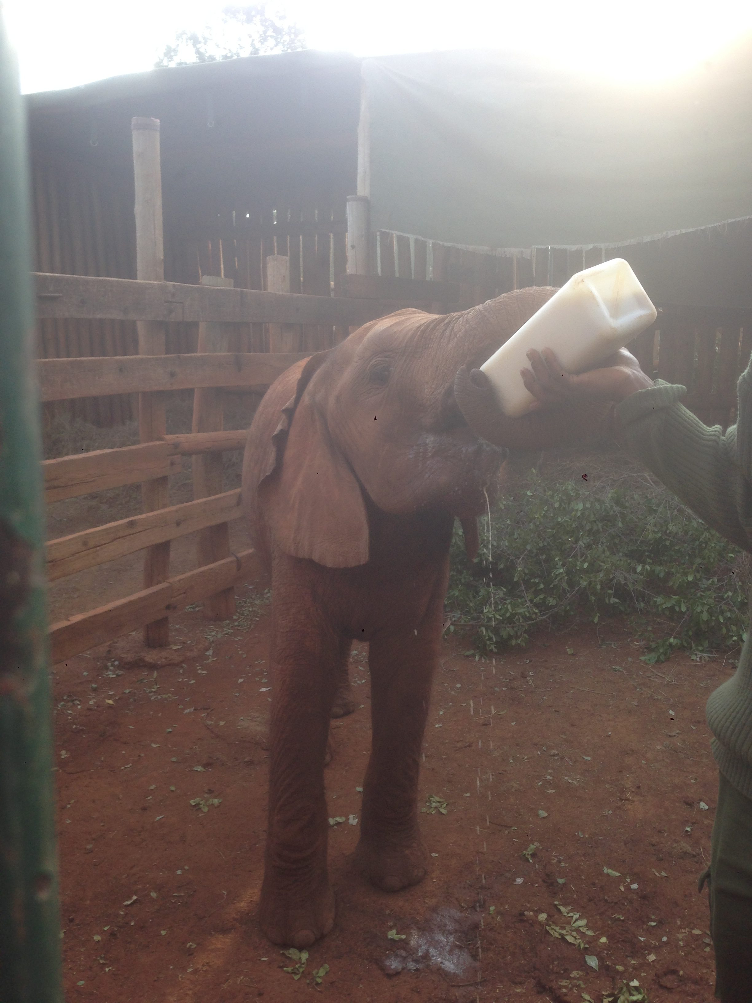 Saving Elephants in Kenya: The David Sheldrick Wildlife Trust | Multicultural Kid Blogs