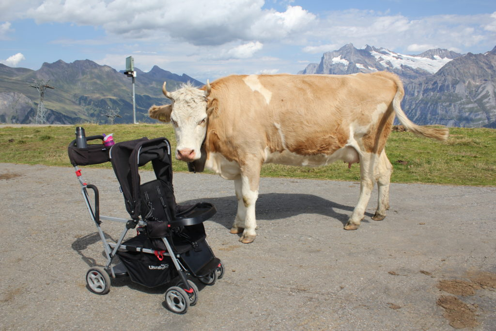 Including Kids in All Stages of the Family Trip | Cow and stroller