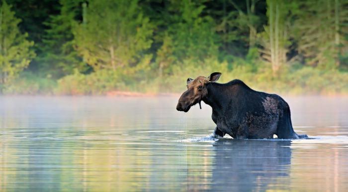 Saskatchewan Wildlife and forests