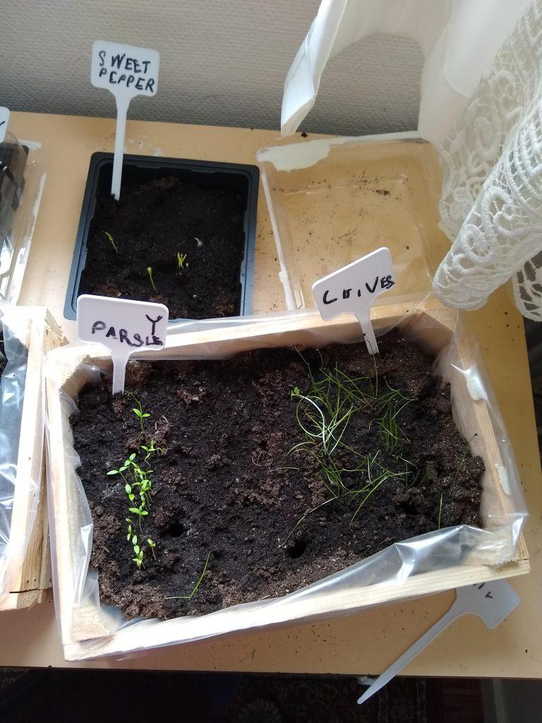Teaching Children to Love Gardening