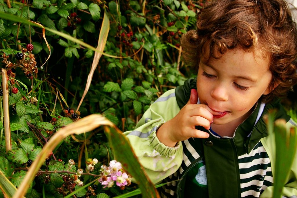 Tasting wild berries | Let Children Fall in love with Earth | MKB