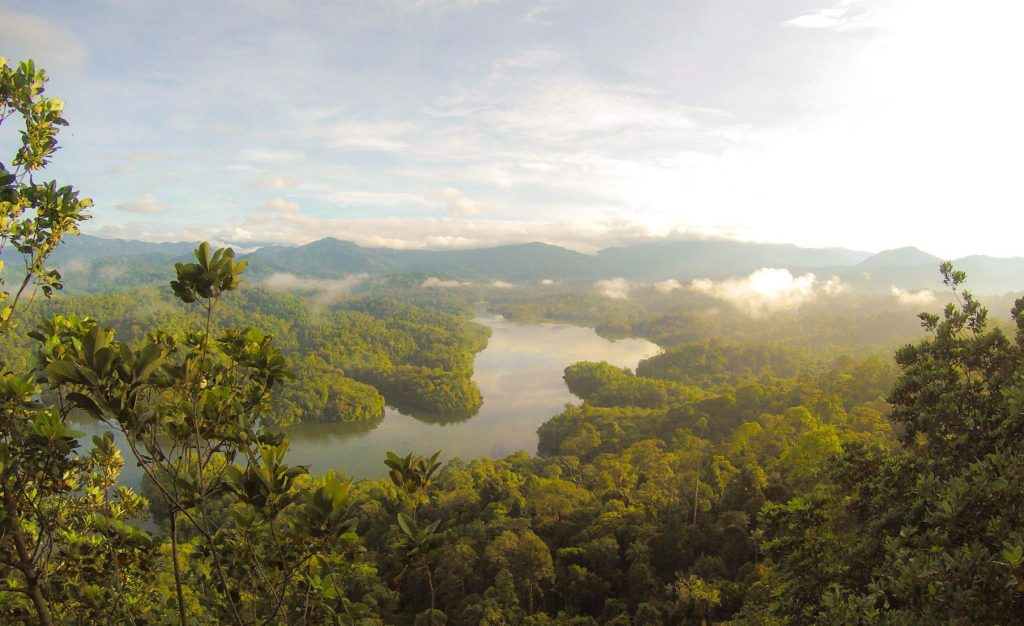 Malaysian rainforest | Fun facts for kids